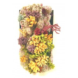 Arrecifes decorados