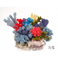 Arrecife Decorado